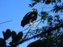 05_bird_sugarloaf